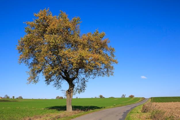 Widok drogi z drzewem w słoneczny dzień jesienią