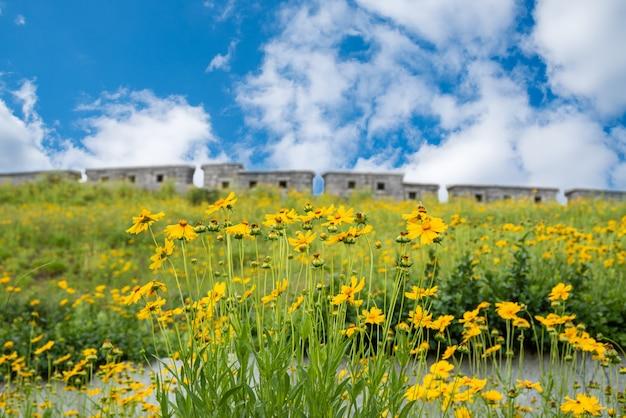 Widok drogi zamku w seulu, gdzie kwitnie błękitne niebo z chmurami i żółte kwiaty.