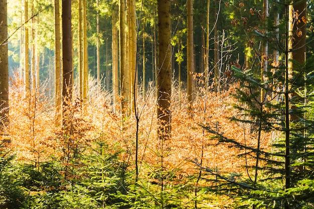Widok drzew z wnętrza lasu