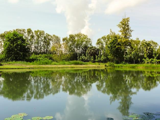 Widok drzewa i błękitne niebo z chmurą odbijającą wodę w stawie.