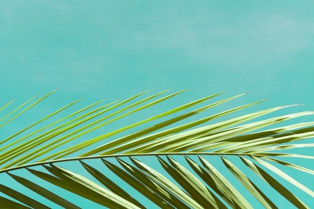 Widok gałąź drzewka palmowe przeciw niebieskiemu niebu