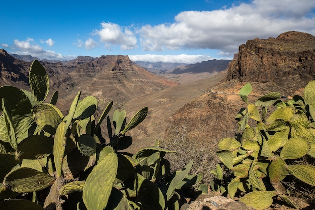 Widok górskiego krajobrazu z punktu widzenia degollada de las yeguas. kaktus na pierwszym planie. gran canaria w hiszpanii.