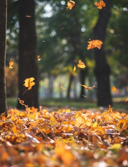 Widok jesień miasta park z drzewami i suchymi żółtymi liśćmi