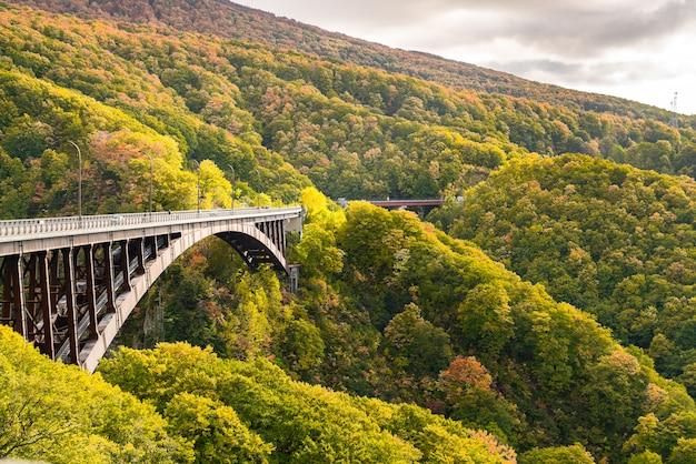 Widok jogakura most z pięknym halnym lasem jesień barwi w towada hachimantai parku narodowym, akita prefektura, japonia.
