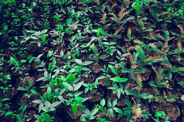 Widok kiełkować rośliny od seedbed salowego