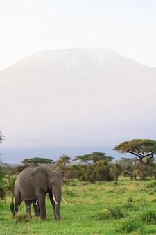 Widok kilimanjaro góra z słoniem