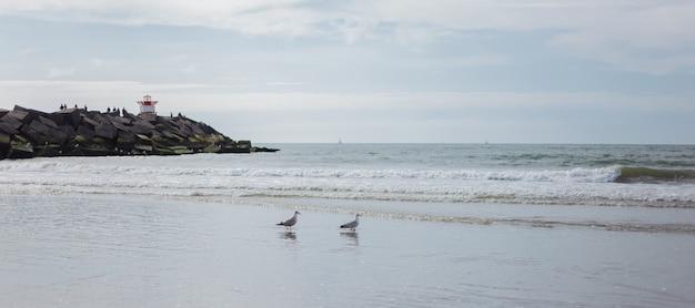 Widok kilku mew nad morzem.