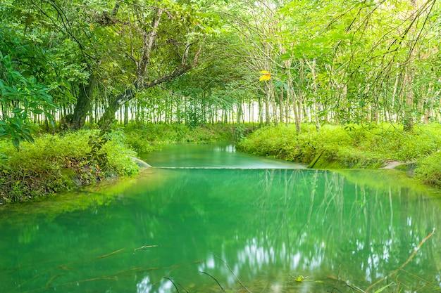 Widok krajobrazowa natura i rzeka w zielonym drzewie