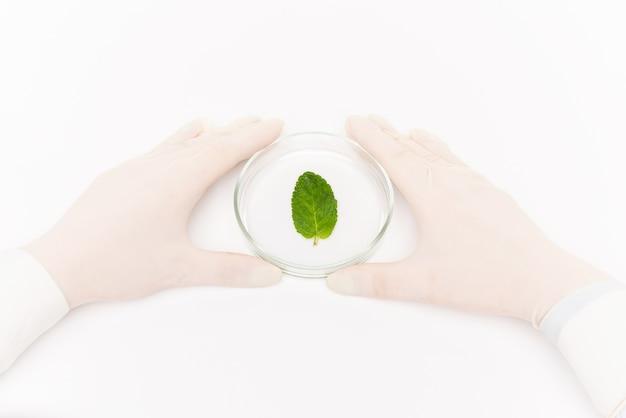 Widok ludzkich rąk w rękawiczkach otaczających szalkę petriego z małym zielonym liściem w izolacji na białym tle