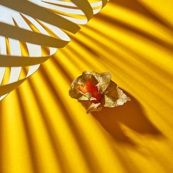 Widok makro kompozycji jesiennej z pojedynczą dojrzałą żółtą pęcherzycą na żółtym tle z miękkimi cieniami w paski.