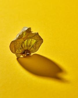Widok makro składu jesienią z pojedynczą suchą pęcherzycą powłoki