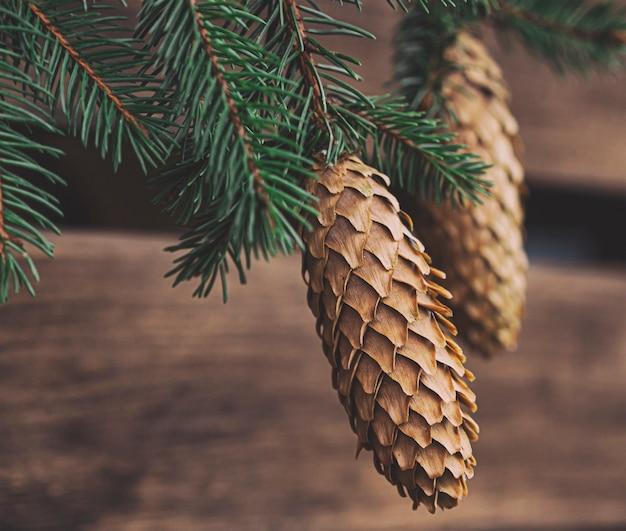 Widok makro szyszka na gałęzi
