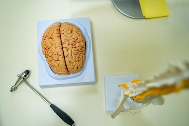 Widok modelu ludzkiego mózgu, modelu kręgosłupa i hummera neurochirurgicznego. koncepcja neurochirurgii.