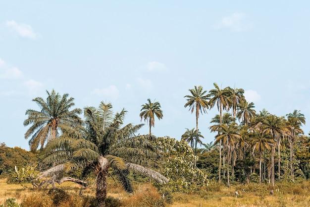 Widok na afrykańską scenerię przyrody z drzewami i roślinnością
