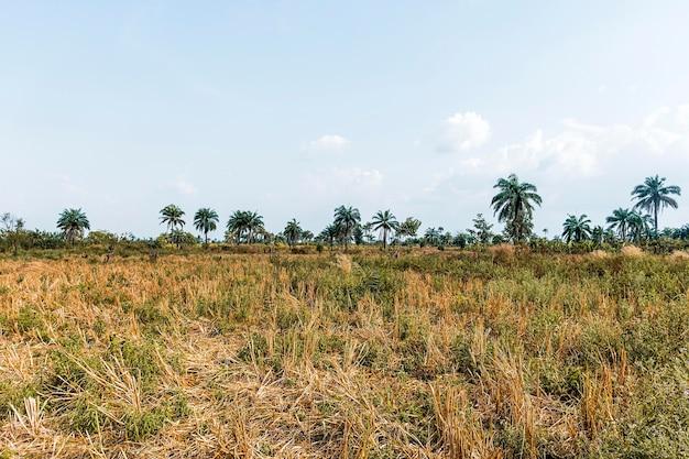 Widok na afrykańską scenerię przyrody z roślinnością i drzewami