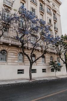 Widok na betonowy budynek w mieście z drzewami