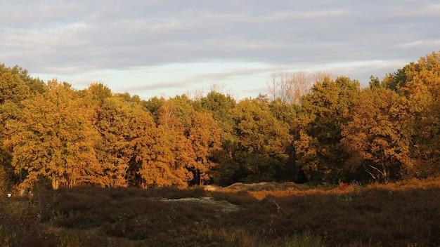 Widok na brązowe drzewa w lesie podczas zachodu słońca