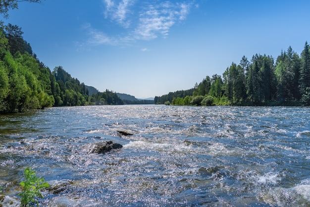 Widok na burzliwą górską rzekę z kamieniami płynącymi wśród lasów iglastych, tajga. flisactwo