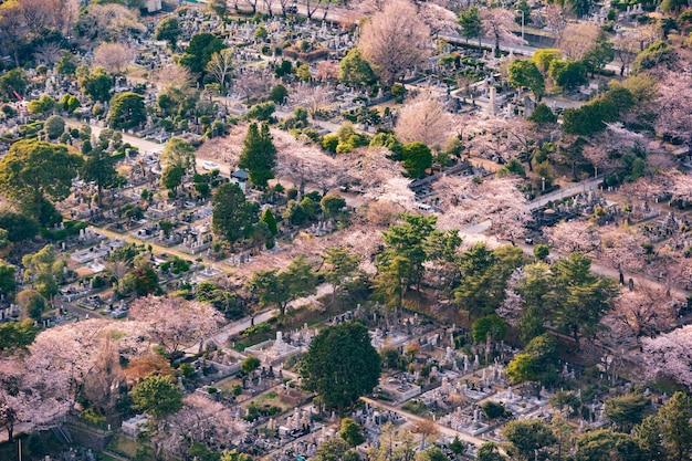 Widok na cmentarz aoyama w tokio, japonia