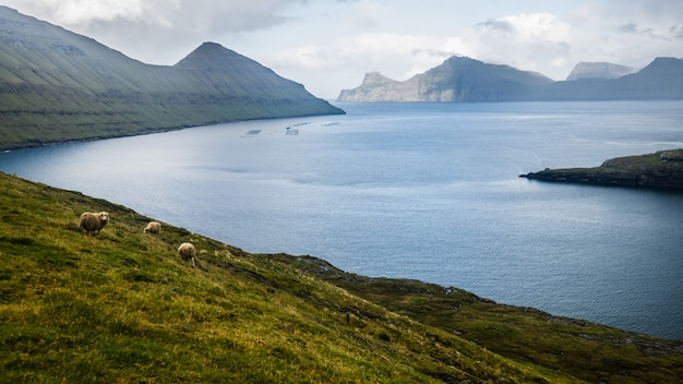 Widok na fjord blisko gjogv przy eysturoy wyspą przy latem, faroe wyspy