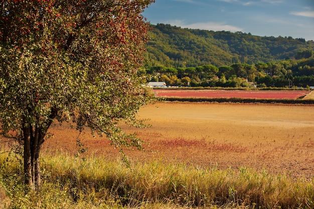 Widok na głóg pełen czerwonych owoców jagodowych w parku przyrody strunjan w słowenii