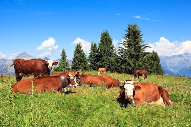 Widok na górski krajobraz z krowami
