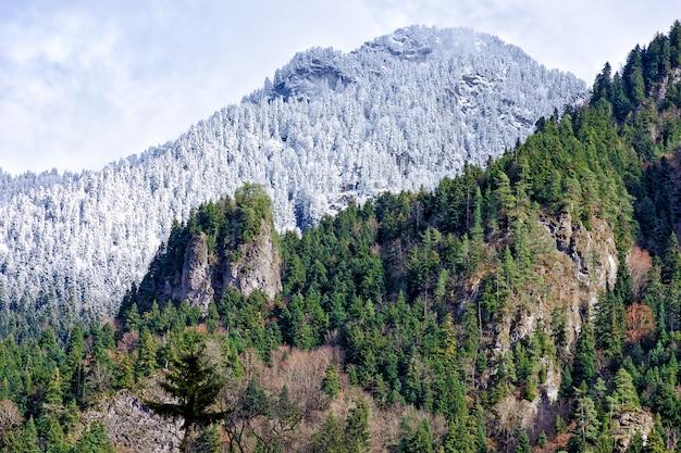 Widok na góry, których część pokryta jest śniegiem i sosnami, oraz część zielonego lasu.