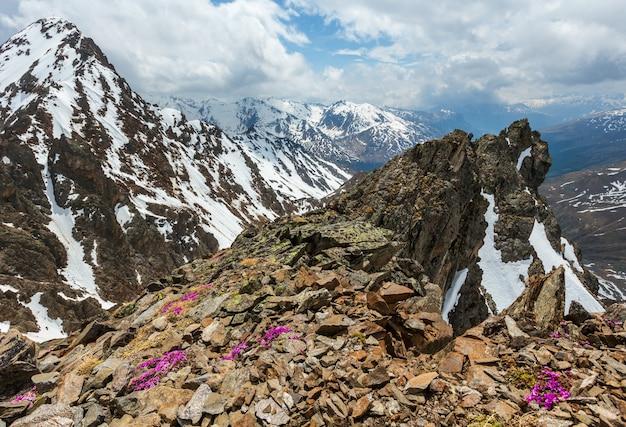 Widok na góry z górnej stacji kolejki linowej karlesjoch (3108m., w pobliżu kaunertal gletscher na granicy austriacko-włoskiej) z alp-purpurowymi kwiatami skalnicy oppositifolia nad przepaścią i chmurami.