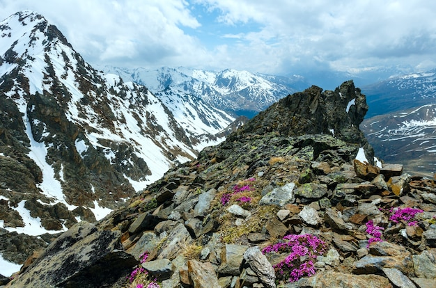 Widok na góry z górnej stacji kolejki linowej karlesjoch (3108m., w pobliżu kaunertal gletscher na granicy austriacko-włoskiej) z kwiatami alpejskimi nad przepaścią i chmurami