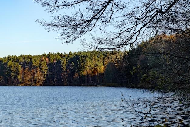 Widok na jezioro i brzeg z nasłonecznionym jesiennym lasem. jesień naturalne tło.