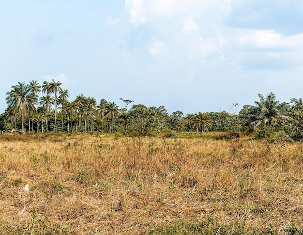 Widok na krajobrazy afrykańskiej przyrody z drzewami