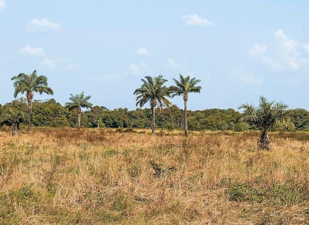 Widok na krajobrazy afrykańskiej przyrody z roślinnością