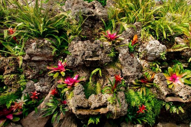Widok na kwiaty bromelii na skałach w ogrodzie