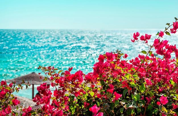 Widok na kwiaty bugenwilli i błękitne morze