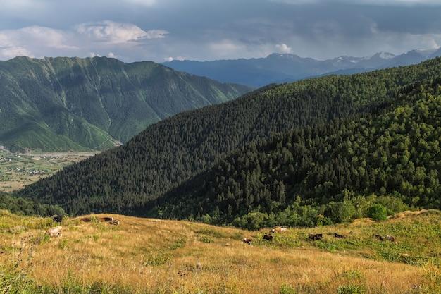 Widok na łące w górach svaneti gruzja