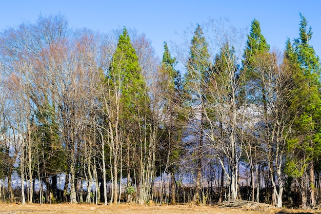 Widok na las i krajobraz georgia. natura zimowa. ciało drzewa.