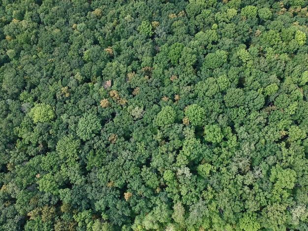 Widok na las z zielenią