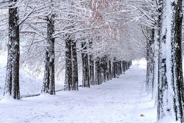 Widok na ławkę i drzewa z padającym śniegiem