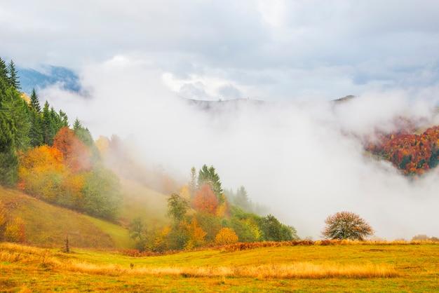 Widok na majestatyczny górski las. wspaniały mglisty wzgórze z kolorowymi drzewami iglastymi. pojęcie natury.