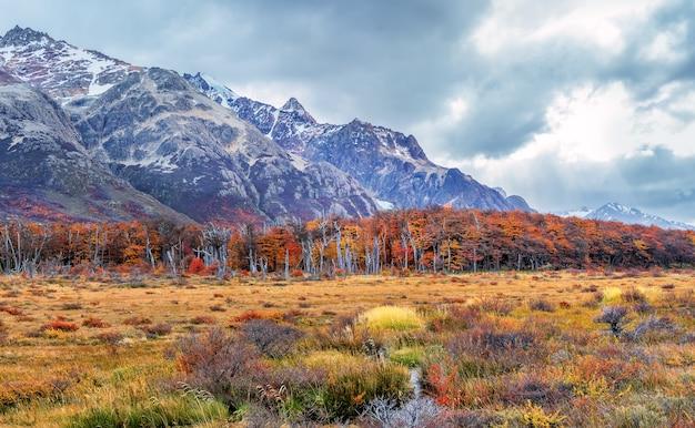 Widok na martwy las, andy i glaciar piedras blancas. park narodowy los glaciares, patagonia
