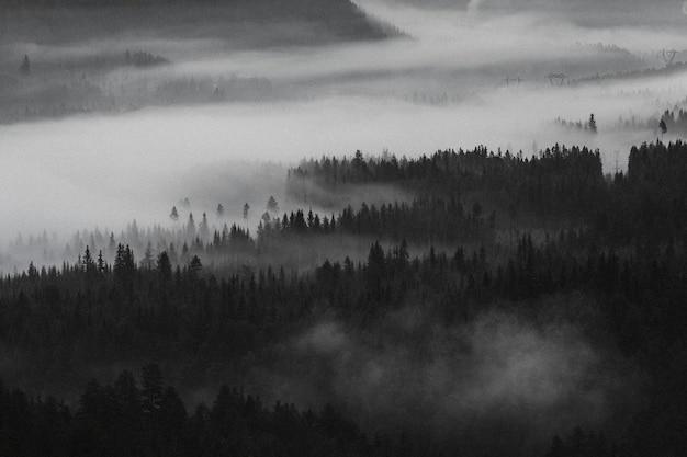 Widok na mgliste lasy w norwegii