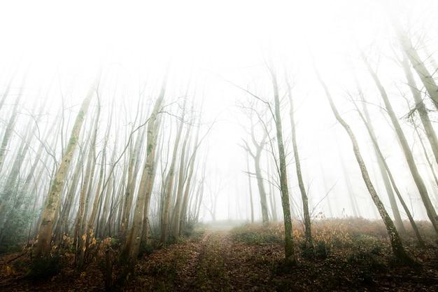 Widok na mglisty las