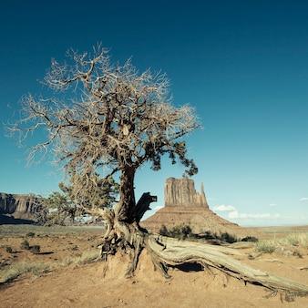 Widok na monument valley i drzewo poddane specjalnej obróbce fotograficznej