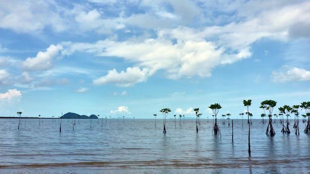 Widok na morze i las namorzynowy na koh pangan. tajlandia