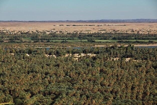 Widok na oazę na nilu w sudanie