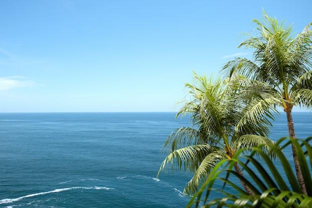 Widok na ocean i zielony liść palmowy