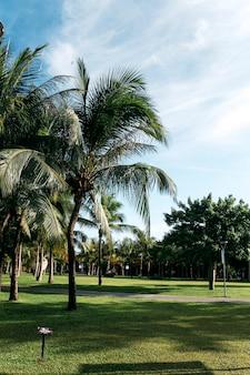 Widok na palmy