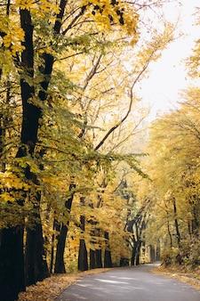 Widok na park jesienią
