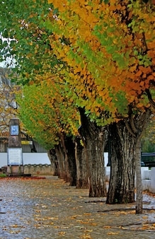 Widok na park miejski w zimie z niektórymi wyrównanymi drzewami.