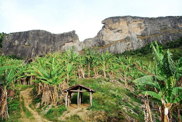 Widok na pedra do bau w sao bento do sapucai, z drzewami bananowymi na pierwszym planie